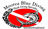 Moorea Blue Diving